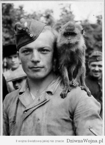 Malpka Kijow 1941