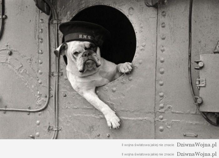 Bulldog HMS Vansittart 1941