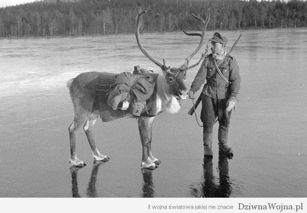 Finski zolniez z reniferem finlandia 1941